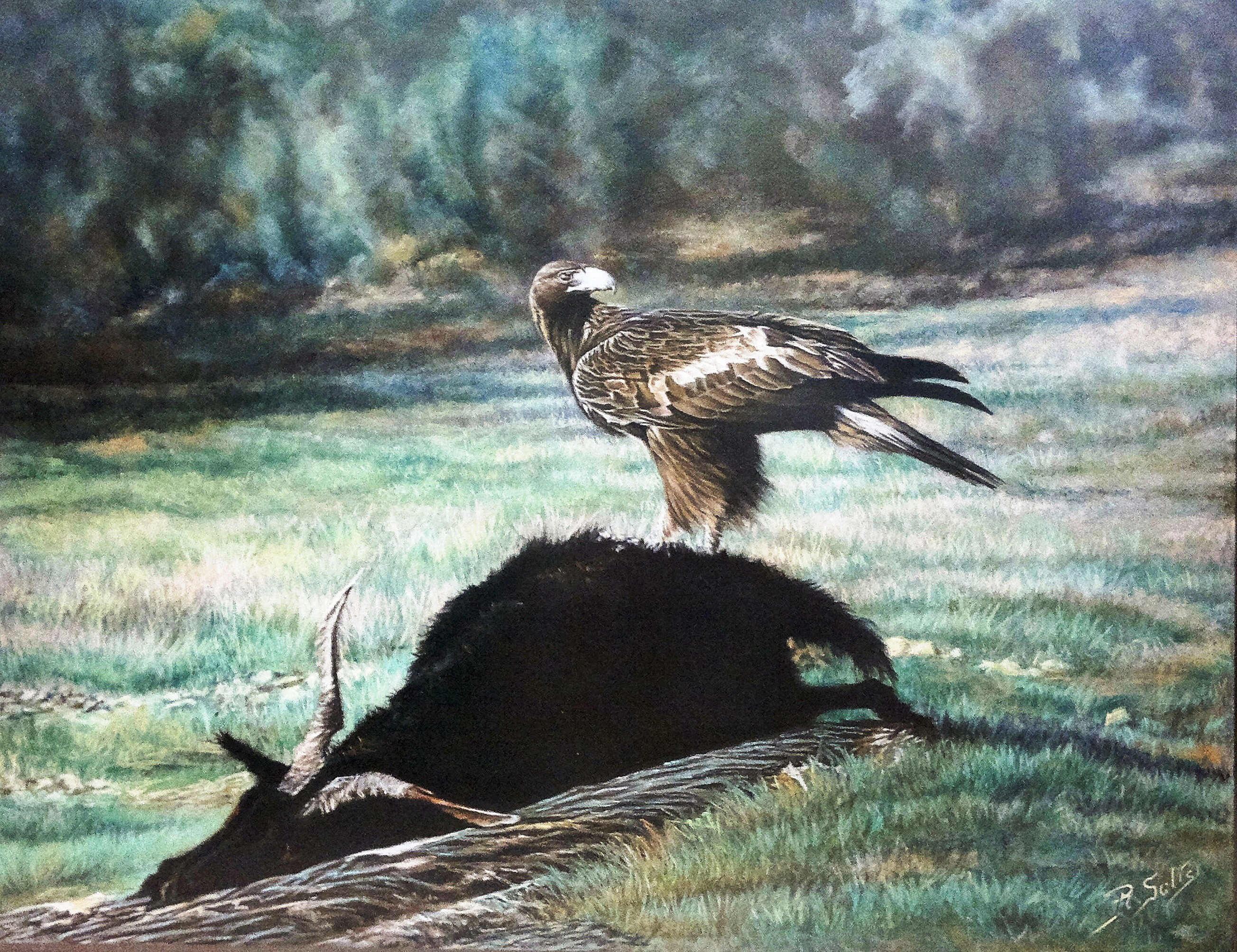 AGUILA REAL, Pastel -65 x 55 cm.
